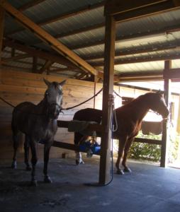 Horses Forever LLC